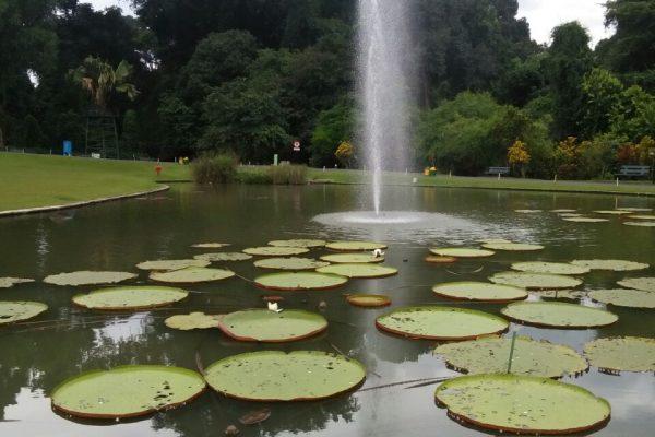 ecodome kebun raya bogor, tempat belajar yang asyik, artistik, dan ciamik | Seputarkota.com