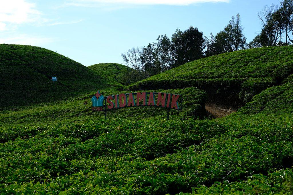 pemandangan kebun teh sidamanik | Seputarkota.com