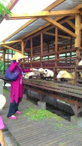 wisata edukasi anak di Bogor