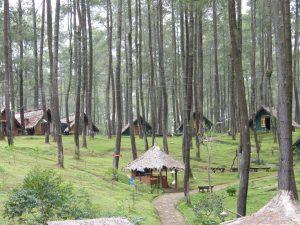 Hutan Pinus Cikole, tempat wisata romantis di Bandung