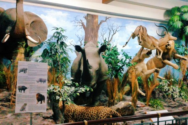 museum di Medan, Rahmat International Wildlife Museum & Gallery