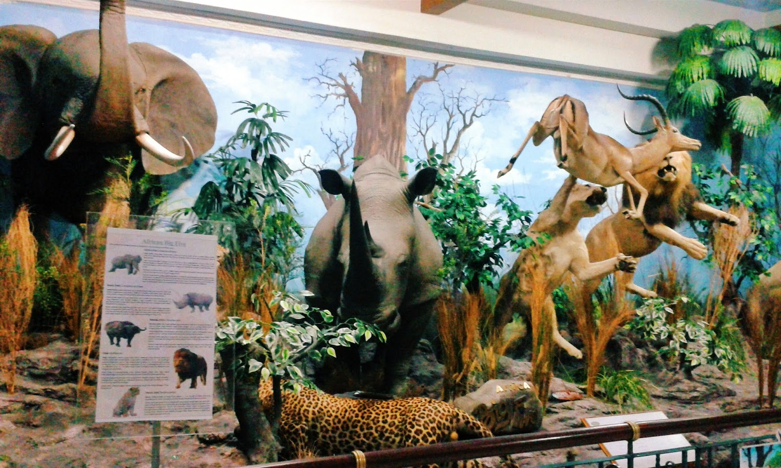 Image result for Rahmat International Wildlife Museum & Gallery