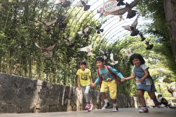 wisata edukasi di Malang, Eco Green Park, seputarkota.com